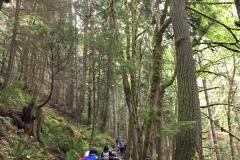 6.23-forest-trek